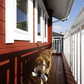 バルコニーは愛犬たちのちょっとした散歩コース
