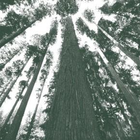 木の個性。